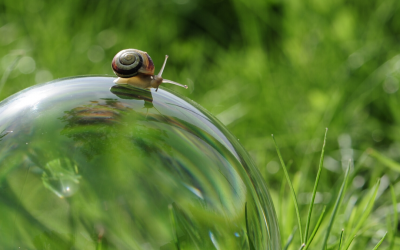 Life at a snails pace